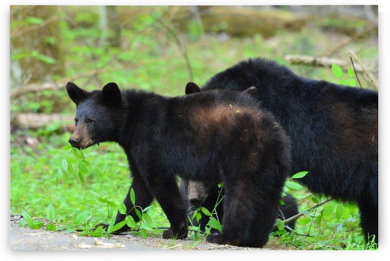 3444- Black Bear by Paul Winterman