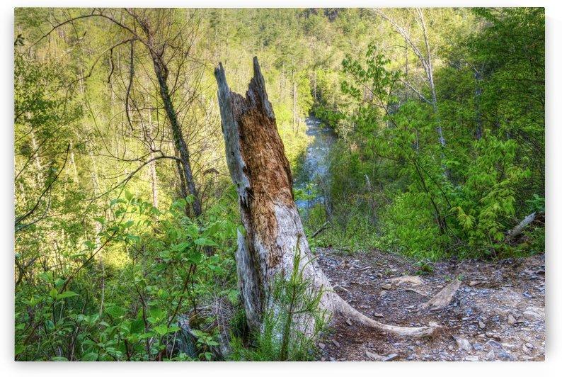 315-stump by Paul Winterman