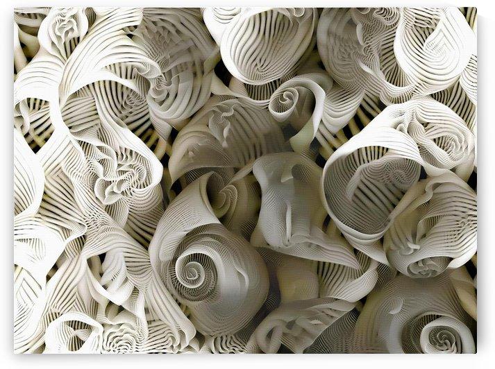 Sea Shells by Bruce Rolff