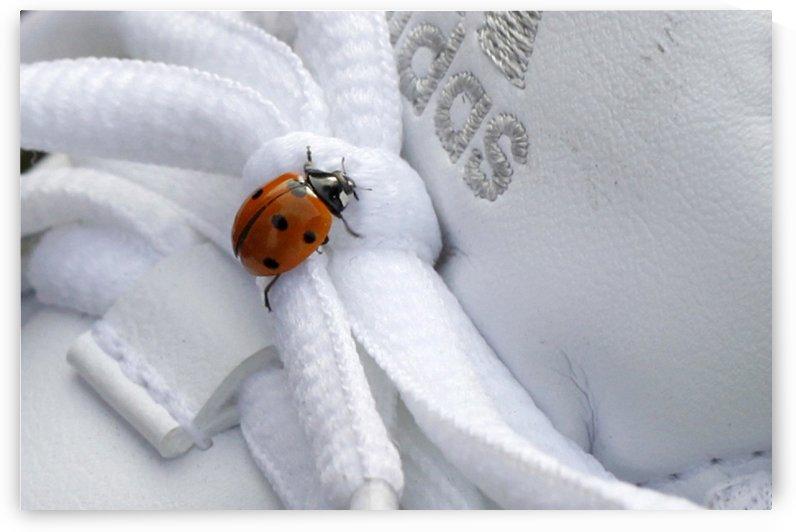 Ladybug by Maria Virginia Castro