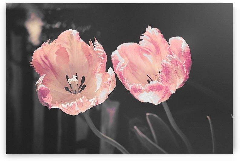 Pink Tulip Canvas by Thecanvasmom