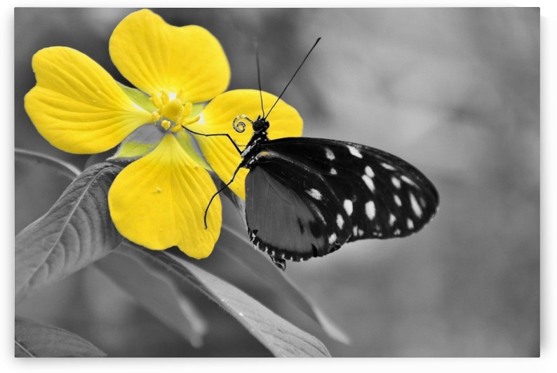 Butterfly kiss on Yellow splash flower by Thecanvasmom