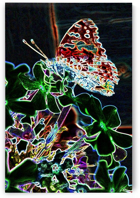 Butterfly by Jim Jones