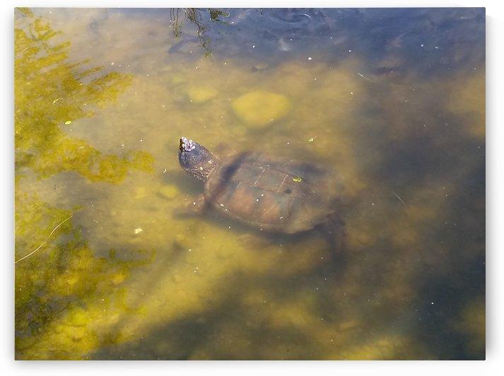 Ninja Turtle by pyro
