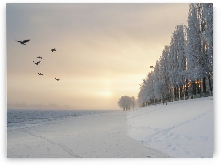 Winter fog flight by pikey_ph