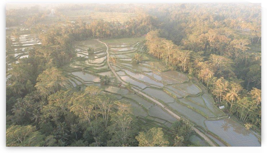 Rice field - Bali by Grant Wilbert