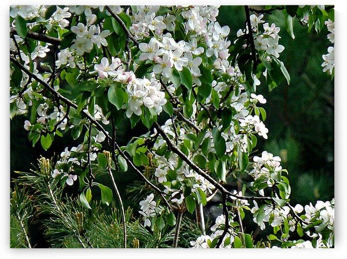 DazzleBlossoms by Cheryl Barker