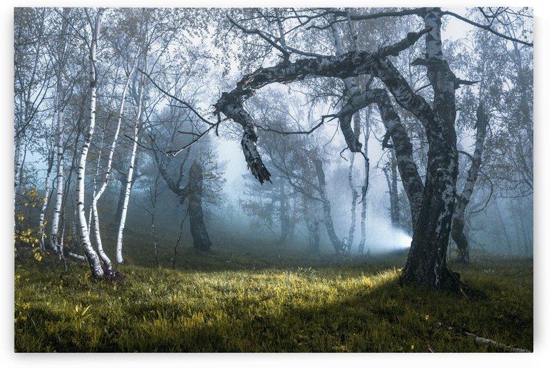 Spark in dark by Marko Radovanovic