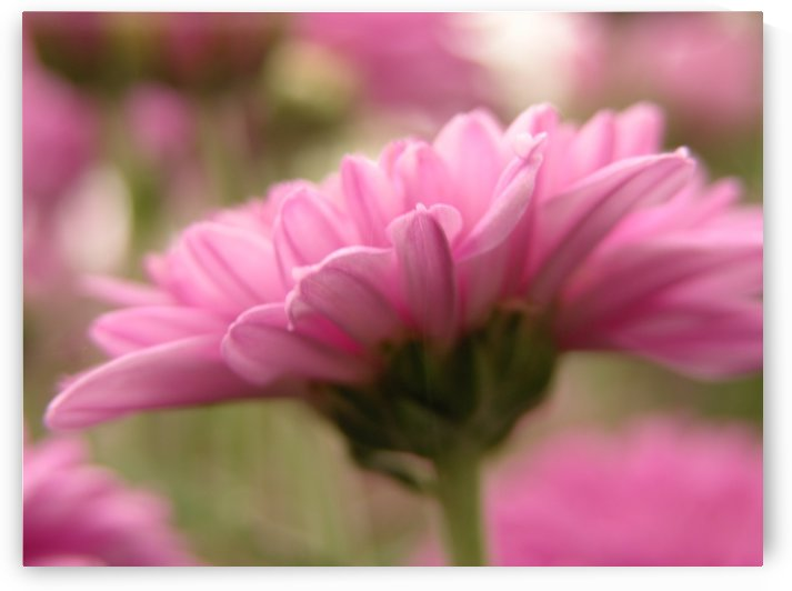 Pink Floral Photograph by Katherine Lindsey Photography