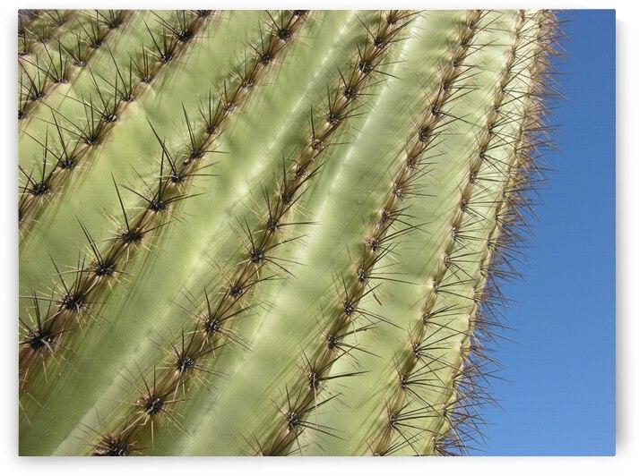 Saguaro Cactus Photograph by Katherine Lindsey Photography