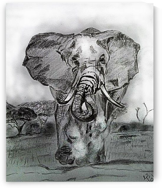 Elephant charging by Gerald Botha