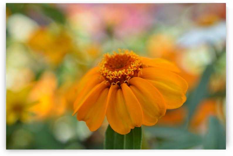 Beautiful Orange Flower Photograoh by Katherine Lindsey Photography