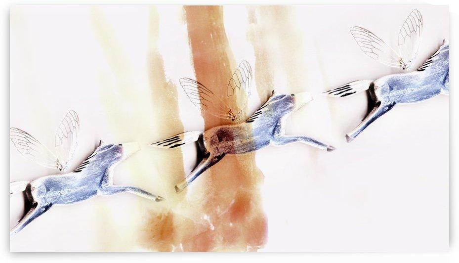 Flying Dreams by Arlana Jade