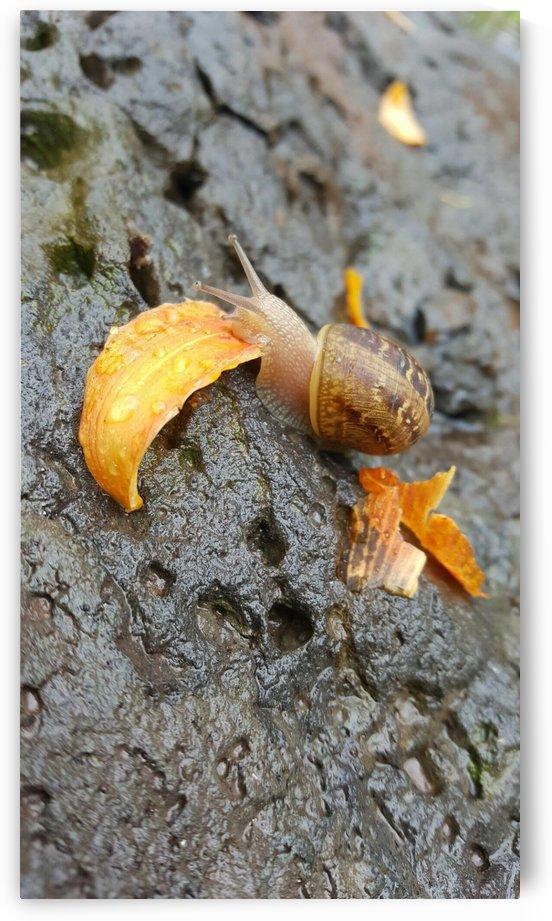Snail by Arlana Jade
