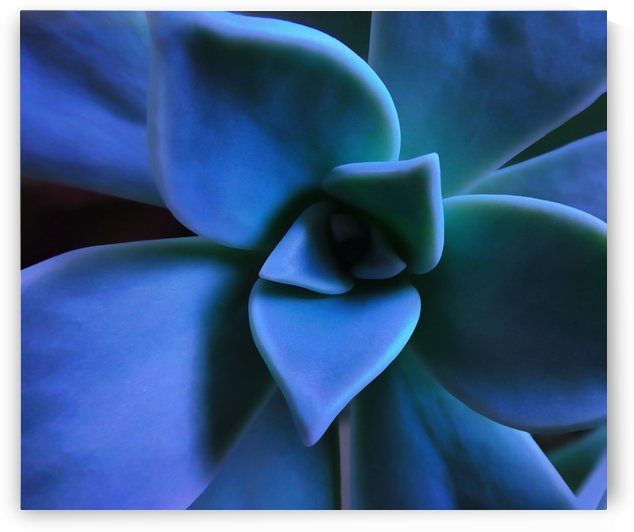 Succulent Blue by Richard D. Jungst