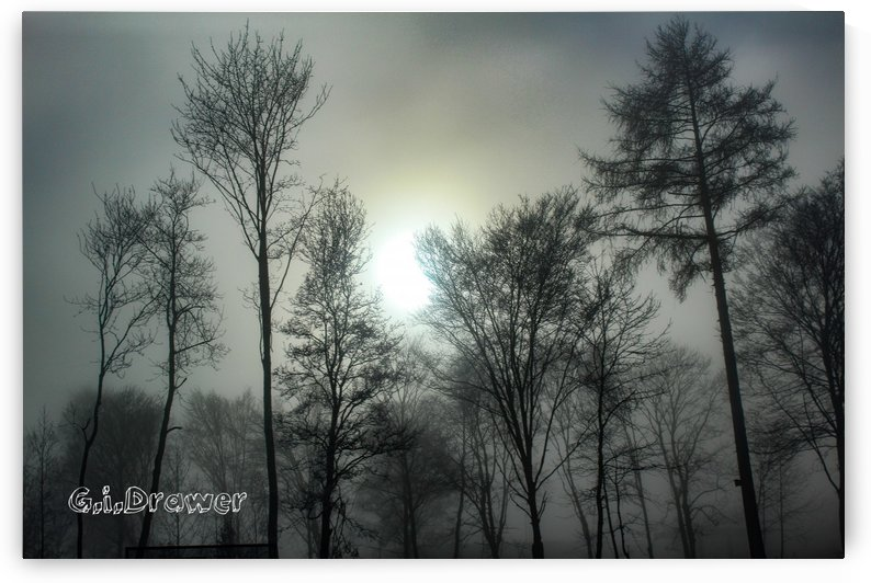 The Fog Part Two by IZGA Photography
