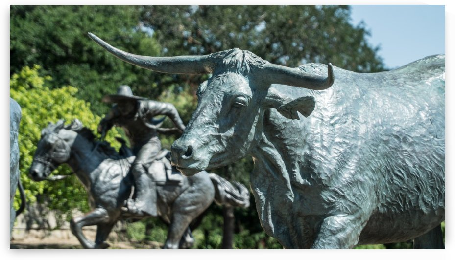 Bulls of Dallas by CWarren