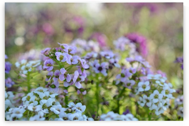 Small Purple Flowers Photograph by Katherine Lindsey Photography
