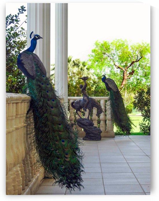 Peacocks at Casa de Shenandoah Las Vegas by Brian W Weber