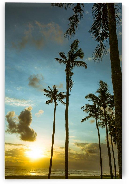 Canguu Bali by Brian Doherty