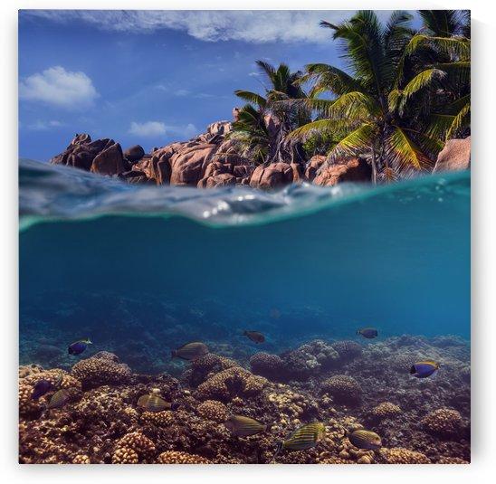 Split. Tropical island by Dmiry Laudin