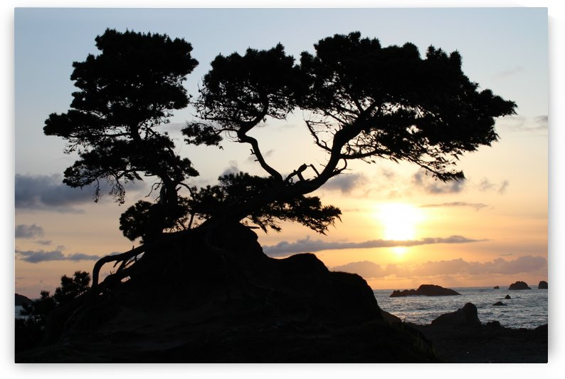 Coastal Sunset by Bear & Badger