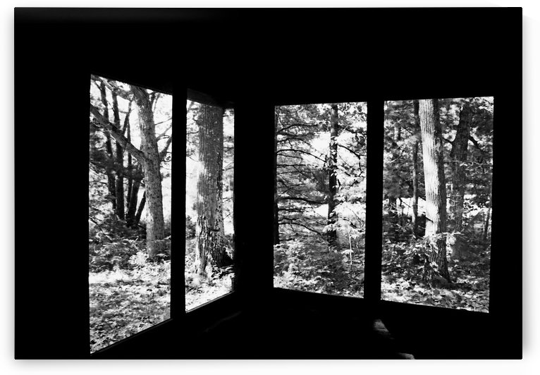 Nature Framed Black And White by Deb Oppermann