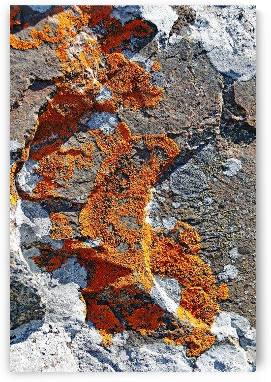 Orange Lichen by Deb Oppermann