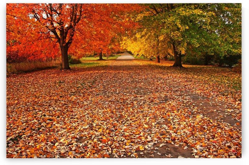An Autumn Walk by Deb Oppermann