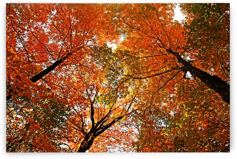 Autumn Party by Deb Oppermann
