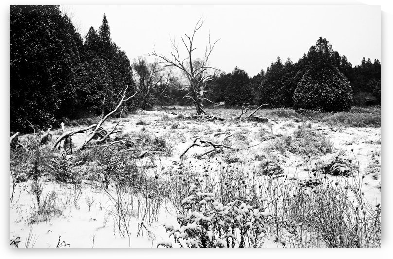 Quiet Winter Black And White by Deb Oppermann