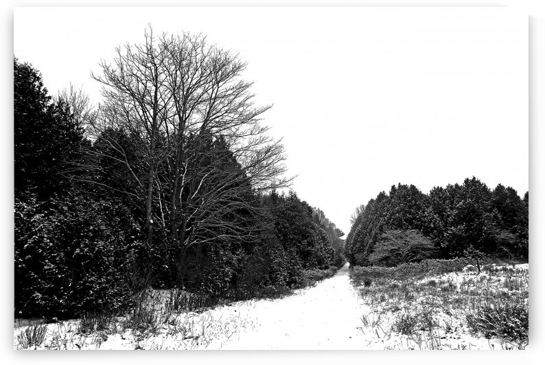 Winter Lane by Deb Oppermann