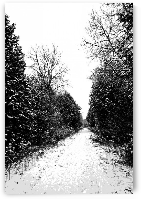 Winter Path by Deb Oppermann