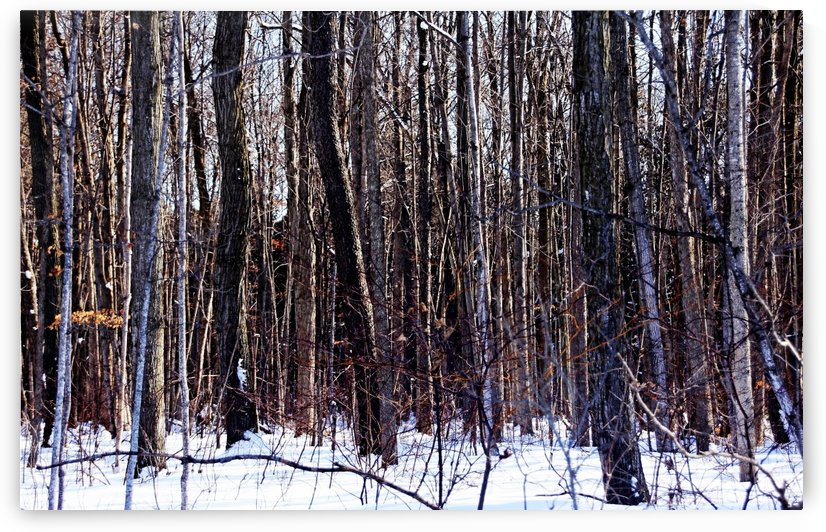 Cant See The Forest For The Trees by Deb Oppermann