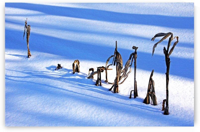 Winter Corn by Deb Oppermann