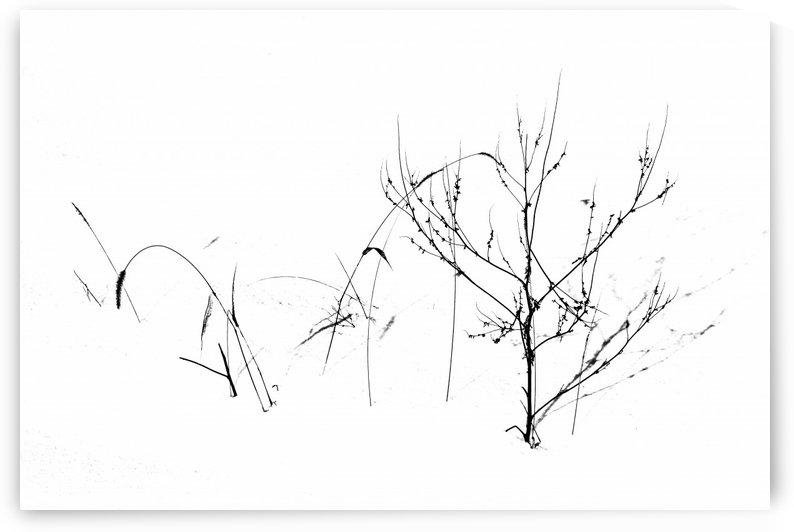 Winters Garden by Deb Oppermann