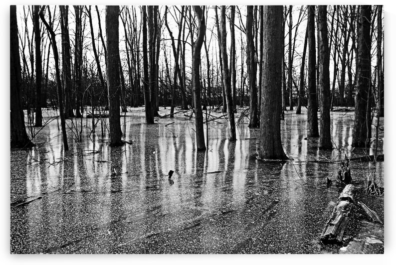 Iced Pond Black And White by Deb Oppermann