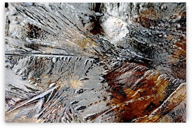 Frozen by Deb Oppermann
