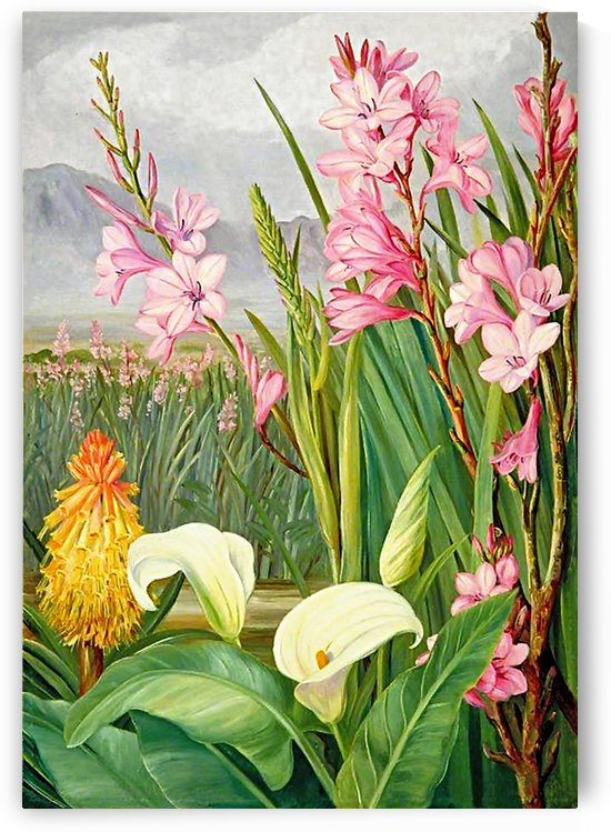 Beautiful PinkWhite And Yellow Flowers_OSG by One Simple Gallery