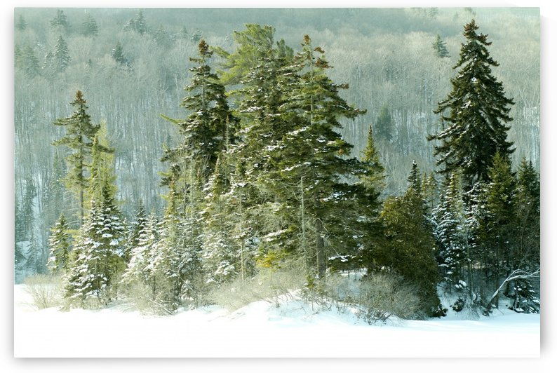 Laurentides in winter by Madame B