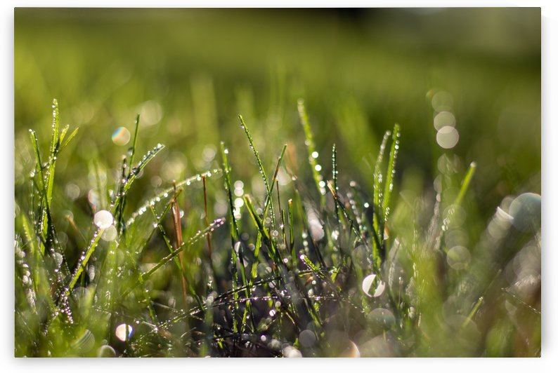 Dew Drops by Noah E Geist