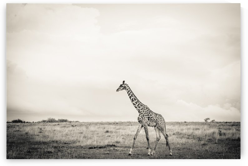 Zebrascape by JADUPONT PHOTO