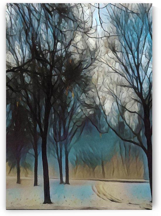 Tangled by Lisa Drew Minneapolis Photo Artist