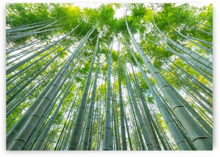 Bamboo Skyline by Heather Scully