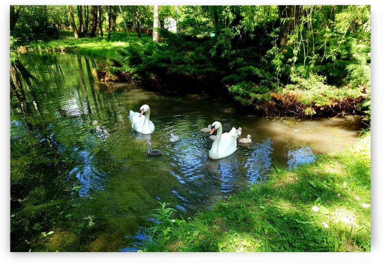 swan 6 by kitso