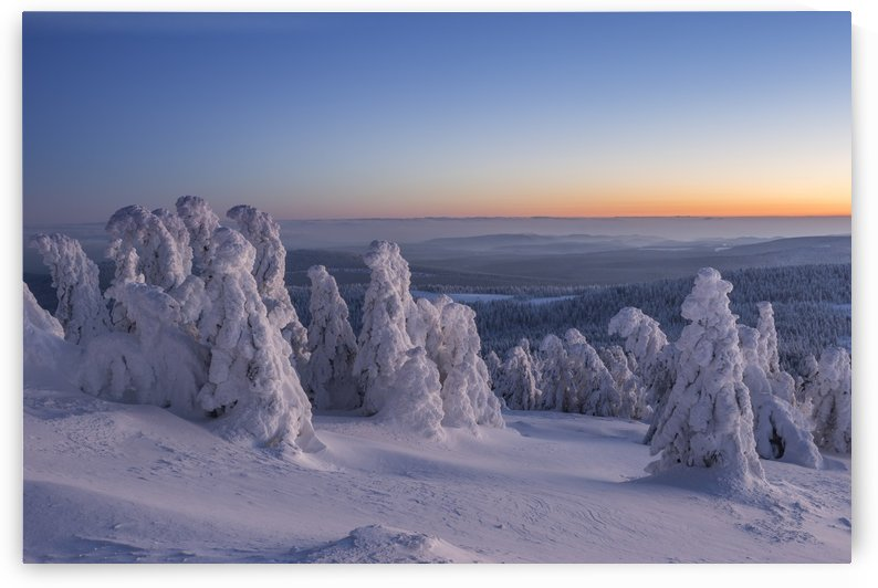 Brockenfirs of the Harz Mountains by Patrice von Collani