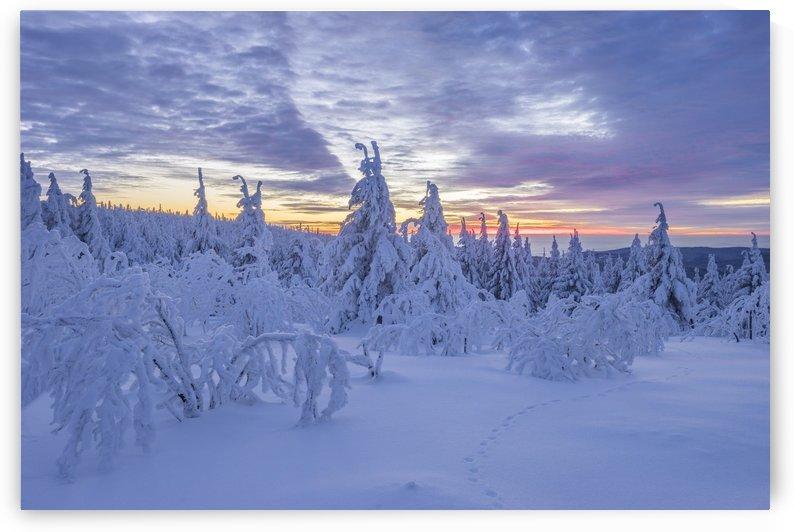Harzer Winter by Patrice von Collani