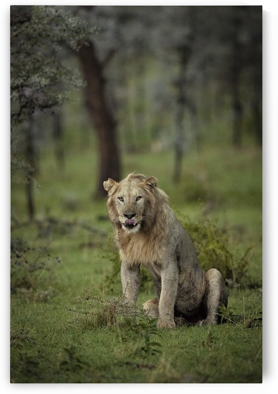 A Lions Tongue by JADUPONT PHOTO