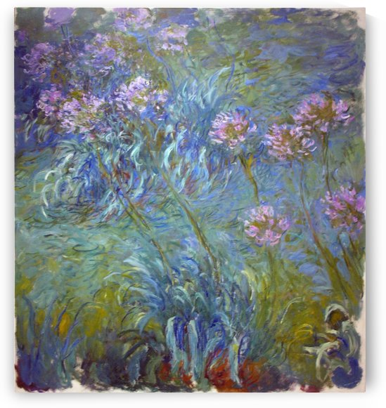 Agapanthus by Claude Monet