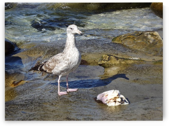 Seagull Guarding Lunch by Linda Peglau